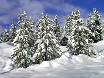 Cabina nell'inverno nella regione selvaggia di legni Fotografia Stock