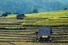Cabina vieja en campos del arroz imagen de archivo