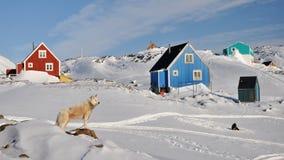 Cabinas y perro rojos y azules en invierno, Groenlandia Fotografía de archivo libre de regalías