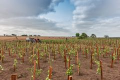CABINDA/ANGOLA - 9 Ιουνίου 2010 - φυτεία ντοματών ακόμα πράσινη στην Αφρική, το τρακτέρ και τους αγρότες στο υπόβαθρο Αφρική, Ανγ Στοκ εικόνα με δικαίωμα ελεύθερης χρήσης