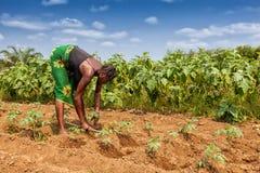 CABINDA/ANGOLA - 2010年6月09日-耕地的农村农夫在卡宾达市 安哥拉,非洲 库存图片