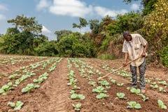 CABINDA/ANGOLA - 2010年6月09日-耕地的农村农夫在卡宾达市 安哥拉,非洲 图库摄影