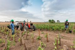 CABINDA/ANGOLA - 2010年6月09日-蕃茄种植园在非洲、拖拉机和农夫仍然绿化在背景中 非洲,安哥拉,客舱 图库摄影