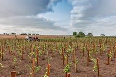 CABINDA/ANGOLA - 2010年6月09日-蕃茄种植园在非洲、拖拉机和农夫仍然绿化在背景中 非洲,安哥拉,客舱 免版税库存图片
