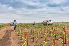 CABINDA/ANGOLA - 2010年6月09日-蕃茄种植园在非洲、拖拉机和农夫仍然绿化在背景中 非洲,安哥拉,客舱 免版税图库摄影