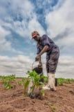 CABINDA/ANGOLA - 2010年6月09日-非洲种植农夫浇灌的圆白菜,卡宾达市 安格斯 免版税库存照片