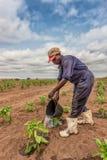 CABINDA/ANGOLA - 2010年6月09日-非洲种植农夫浇灌的圆白菜,卡宾达市 安格斯 库存照片
