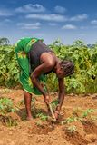 CABINDA/ANGOLA - 9 de junho de 2010 - fazendeiro rural até à terra em Cabinda Angola, África Imagens de Stock