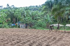 CABINDA/ANGOLA - 9 de junho de 2010 - fazendeiros rurais até à terra em Cabinda Angola, África Imagem de Stock Royalty Free