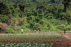 CABINDA/ANGOLA - 9 de junho de 2010 - fazendeiros rurais até à terra em Cabinda Angola, África Imagens de Stock Royalty Free