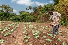 CABINDA/ANGOLA - 9 de junio de 2010 - granjeros rurales hasta a la tierra en Cabinda Angola, África foto de archivo