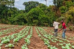 CABINDA/ANGOLA - 9 de junio de 2010 - granjeros rurales hasta a la tierra en Cabinda Angola, África fotos de archivo libres de regalías