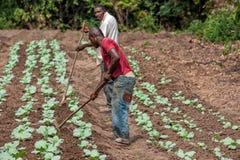 CABINDA/ANGOLA - 9 de junio de 2010 - granjeros rurales hasta a la tierra en Cabinda Angola, África imágenes de archivo libres de regalías