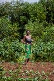 CABINDA/ANGOLA - 9 giugno 2010 - agricoltore femminile rurale che lavora nel campo Immagine Stock