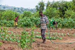 CABINDA/ANGOLA - 9 giugno 2010 - agricoltore rurale africano alla piantagione d'innaffiatura Immagine Stock Libera da Diritti