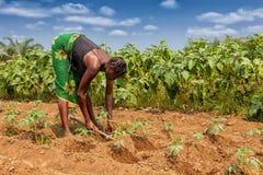 CABINDA/ANGOLA - 9 giugno 2010 - agricoltore rurale fino a terra in Cabinda L'Angola, Africa Immagini Stock Libere da Diritti