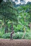CABINDA/ANGOLA - 9 giugno 2010 - agricoltore rurale fino a terra in Cabinda L'Angola, Africa Immagine Stock