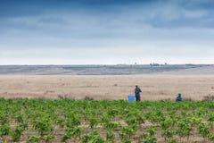 CABINDA/ANGOLA - 9 giugno 2010 - agricoltori rurali fino a terra in Cabinda L'Angola, Africa Immagine Stock Libera da Diritti