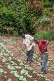 CABINDA/ANGOLA - 9 giugno 2010 - agricoltori rurali fino a terra in Cabinda L'Angola, Africa Immagini Stock Libere da Diritti
