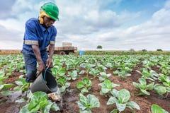 CABINDA/ANGOLA - 9 giugno 2010 - cavolo di innaffiatura africano dell'agricoltore che pianta, Cabinda l'angola Fotografia Stock Libera da Diritti