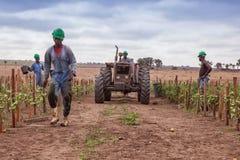 CABINDA/ANGOLA - 9 giugno 2010 - gruppo degli agricoltori africani che camminano fra la piantatura con il trattore Immagini Stock Libere da Diritti