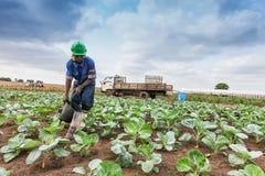 CABINDA/ANGOLA - 9 juin 2010 - agriculteur africain à la plantation de arrosage Images libres de droits