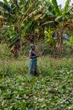 CABINDA/ANGOLA - 9 juin 2010 - agriculteur féminin rural travaillant dans le domaine Photographie stock