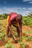 CABINDA/ANGOLA - 9 juin 2010 - agriculteur rural à jusqu'à la terre dans Cabinda L'Angola, Afrique Images libres de droits