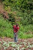 CABINDA/ANGOLA - 9 juin 2010 - agriculteur rural à jusqu'à la terre dans Cabinda L'Angola, Afrique Photographie stock libre de droits
