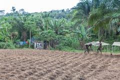 CABINDA/ANGOLA - 9 juin 2010 - agriculteurs ruraux à jusqu'à la terre dans Cabinda L'Angola, Afrique Image libre de droits