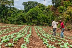 CABINDA/ANGOLA - 9 juin 2010 - agriculteurs ruraux à jusqu'à la terre dans Cabinda L'Angola, Afrique Photos libres de droits