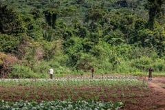 CABINDA/ANGOLA - 9 juin 2010 - agriculteurs ruraux à jusqu'à la terre dans Cabinda L'Angola, Afrique Images libres de droits