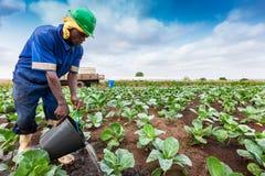 CABINDA/ANGOLA - 09JUN2010 - Afrykański rolnik nawadniać plantację zdjęcie royalty free