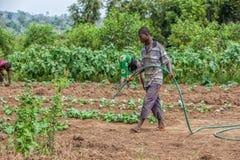 CABINDA/ANGOLA - 09 2010 JUN - Afrykański wiejski rolnik nawadniać plantację Obrazy Royalty Free