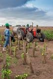 CABINDA/ANGOLA - 09 2010 JUN - pomidor plantacja wciąż zielenieją w Afryka, ciągniku i rolnikach w tle, Afryka, Angola, kabina Obraz Stock