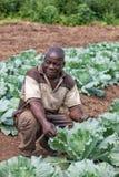 CABINDA/ANGOLA - 09 2010 JUN - portret Afrykański wiejski rolnik Cabinda Angola Obrazy Stock