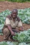 CABINDA/ANGOLA - 09 2010 JUN - portret Afrykański wiejski rolnik Cabinda Angola Obraz Stock