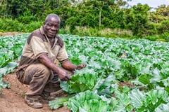 CABINDA/ANGOLA - 09 2010 JUN - portret Afrykański wiejski rolnik w plantaci Obrazy Stock