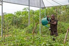 CABINDA/ANGOLA - 09 2010 JUN - portret Afrykański wiejski rolnik w plantaci Obraz Stock