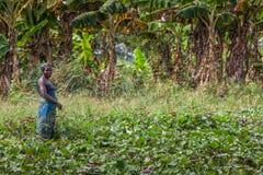 CABINDA/ANGOLA - 09 2010 JUN - Wiejski żeński średniorolny działanie w polu Zdjęcie Stock