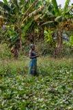 CABINDA/ANGOLA - 09 2010 JUN - Wiejski żeński średniorolny działanie w polu Fotografia Stock