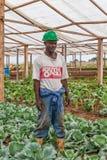CABINDA/ANGOLA - 9. Juni 2010 - Porträt des afrikanischen Landwirts innerhalb des Ofens stockfotografie