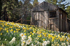 Cabine bij de Heuvel van de Gele narcis royalty-vrije stock afbeeldingen