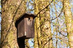 Cabine d'oiseau accrochée sur un arbre Images stock