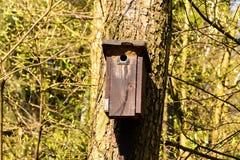 Cabine do pássaro pendurada em uma árvore imagens de stock royalty free