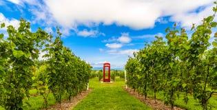 Cabine e uvas vermelhas de telefone Imagens de Stock