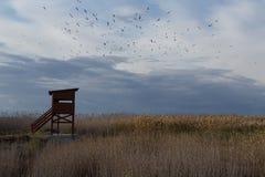Cabine especial para fotografar pássaros imagens de stock