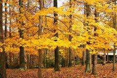 Cabine in het hout met de herfst stock afbeelding