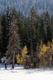 Cabine in Sneeuw Stock Foto's