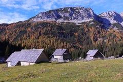 Cabine soleggiate della montagna con gli alberi di larice gialli Fotografia Stock